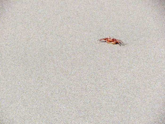 #beachlife #cangrejos #northbeach #trip Animal Wildlife Nature Sea Life