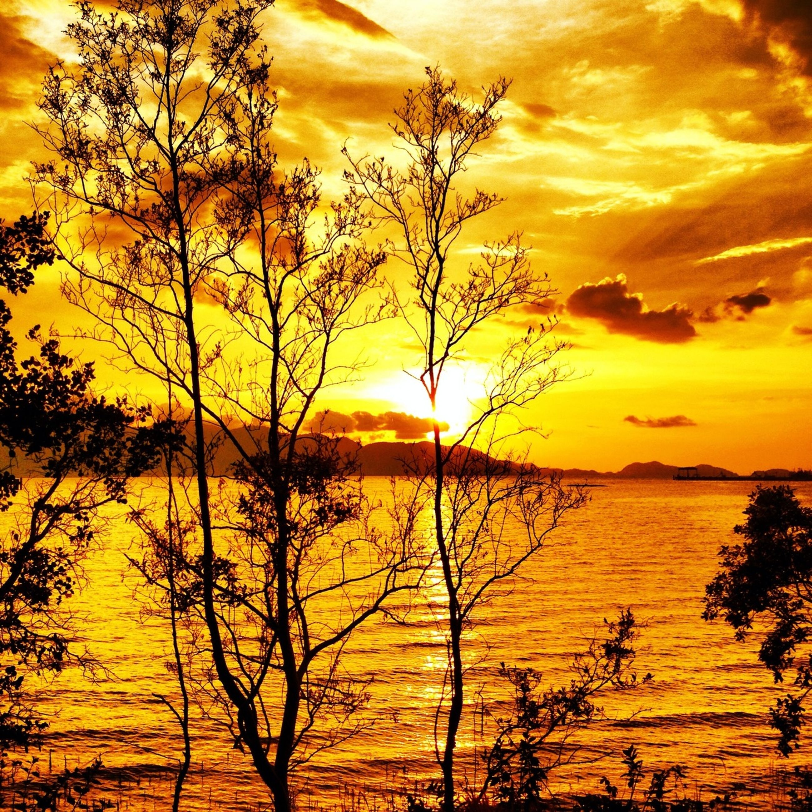 sunset, orange color, scenics, tranquil scene, beauty in nature, tranquility, sky, water, idyllic, silhouette, nature, sun, tree, branch, sea, majestic, dramatic sky, cloud - sky, bare tree, horizon over water