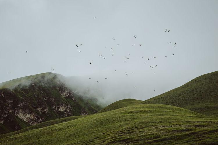 Flock of birds flying in the sky