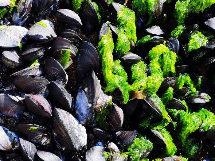 Full frame shot of mussel