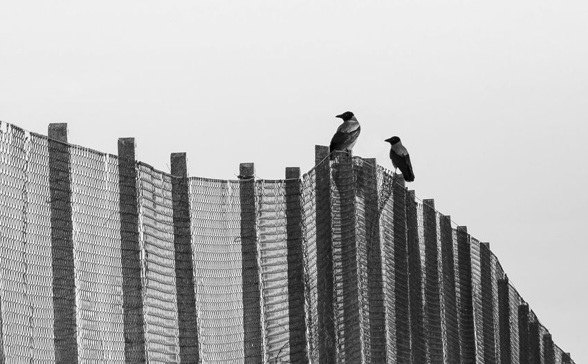 Low angle view of birds on building against sky