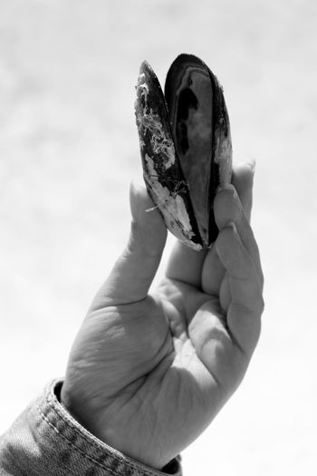Cropped Image Of Hand Holding Mussel
