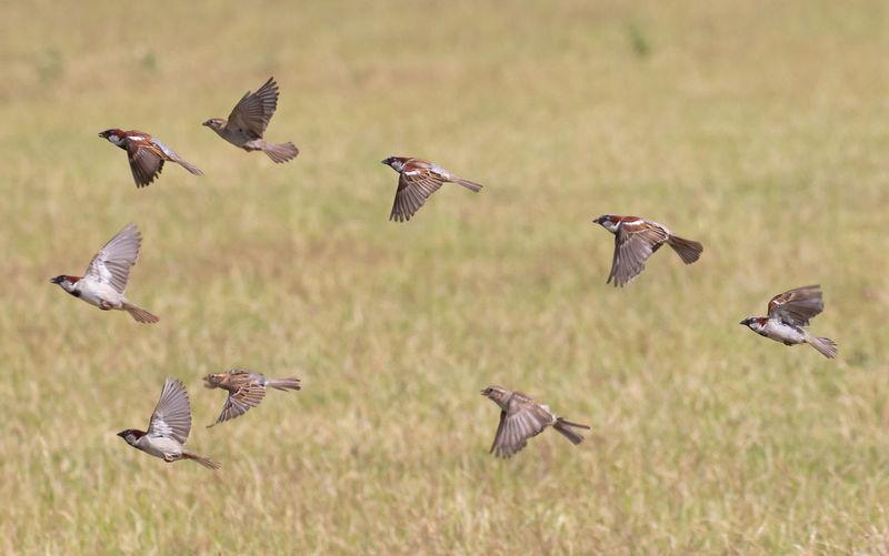 Birds flying in the field