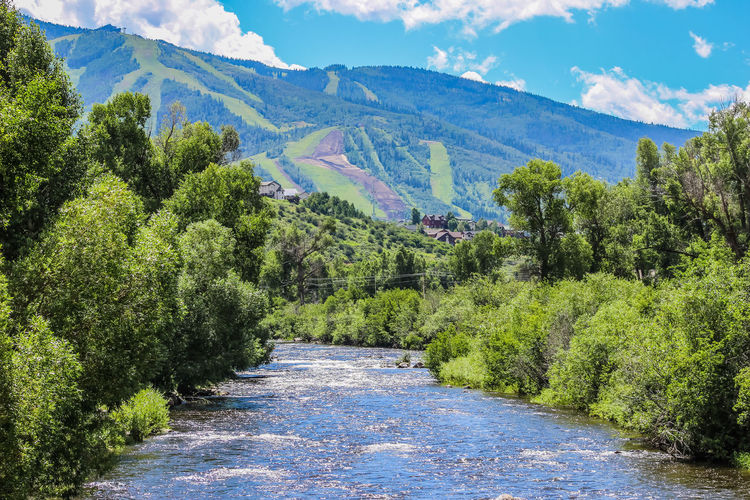 Scenic View Of Yampa River Amidst Trees