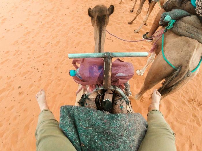 desert road Summer Road Tripping Sand Dune Working Sand Men Close-up Camel Arid Climate Egyptian Culture Arid Landscape Pyramid Horse Desert Saddle Arid