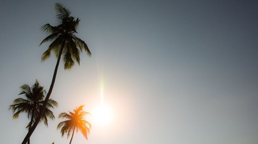 EyeEm Selects Tree Plant Sky Palm Tree Beauty In Nature Tropical Climate Tranquility Growth Sunlight No People Nature Tranquil Scene Scenics - Nature Sun Leaf Silhouette Sunset Clear Sky
