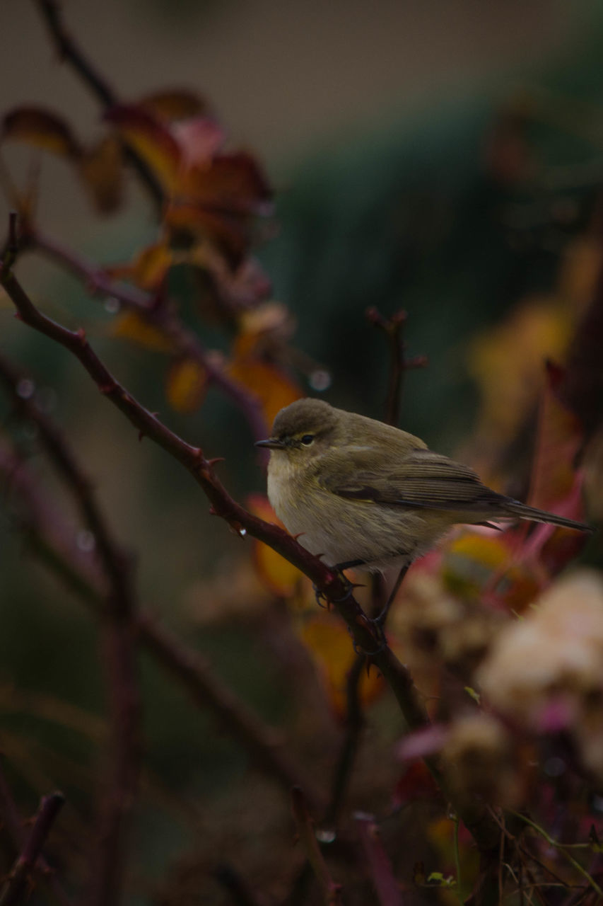 bird, animals in the wild, perching, animal themes, one animal, animal wildlife, nature, no people, outdoors, day, branch, beauty in nature, close-up, tree
