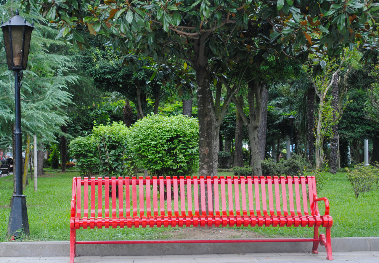 EMPTY BENCH BY TREES IN PARK AGAINST PLANTS IN BACKGROUND