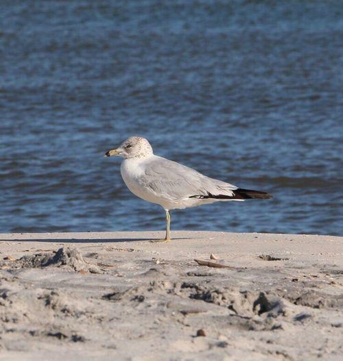 Bird Beach