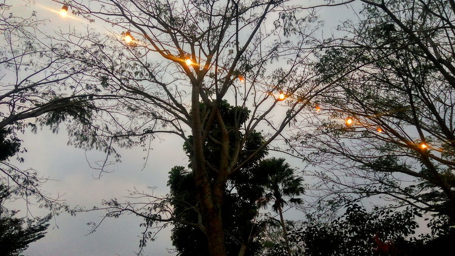 Low angle view of tree against sky during sunset