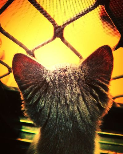 Close-up Animal Themes Indoors  Day Colours Contrast Artsy Beautiful One Animal Feline Domestic Cat Looking Outside Yellow Glow
