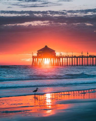 Bird perching at beach during sunset