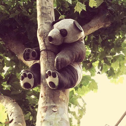 ..tree panda..