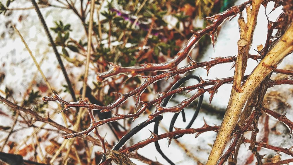 Freezing rain... Winter Weather Freezing Rain Ice Nature Tree Branch Winter Day Outdoors No People Focus On Foreground Growth Cold Temperature Beauty In Nature Plant Snow Close-up