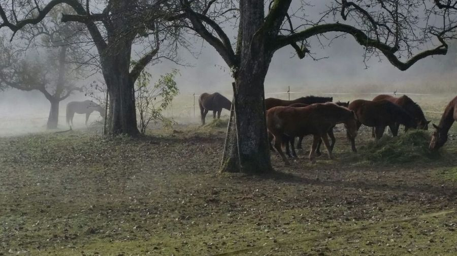 Animal Themes Beauty In Nature Foggy Morning Grass Group Of Horse Horses Nature No People Outdoors Tree