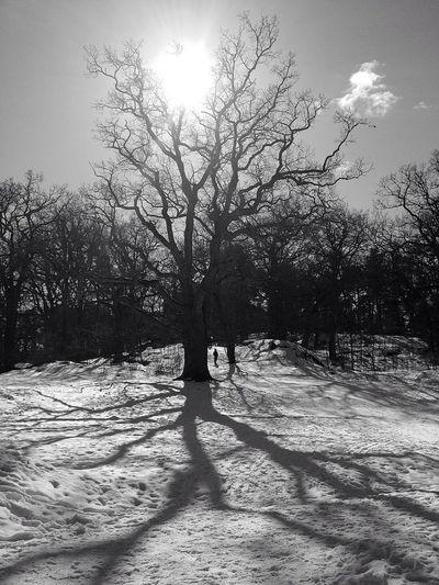 Blackandwhite Landscape_Collection Bw_trees Schattenspiel