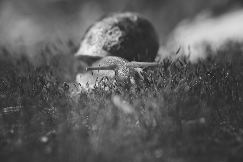 Selective Focus Field Animals In The Wild Plant One Animal Animal Wildlife Grass Animal Themes Animal Nature Land No People Growth Day Close-up Vertebrate Outdoors Beauty In Nature Reptile Animal Body Part