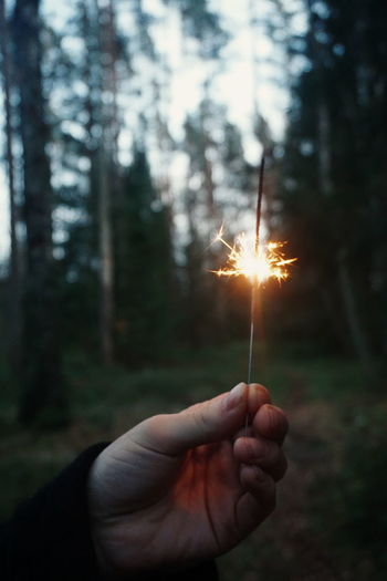Cropped hand of man holding sparkler at forest