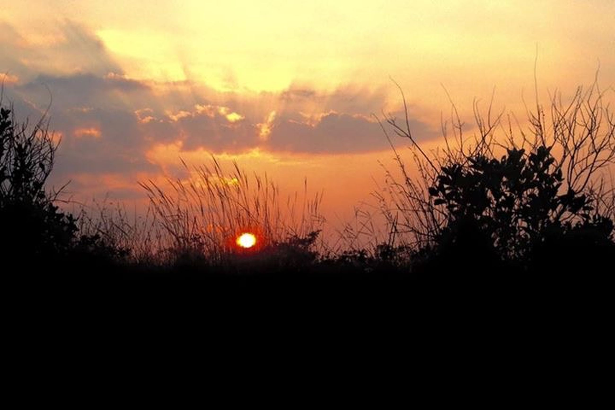 sunset, sun, silhouette, scenics, orange color, tranquil scene, beauty in nature, tranquility, sky, nature, idyllic, landscape, tree, cloud - sky, field, growth, outdoors, no people, majestic, cloud