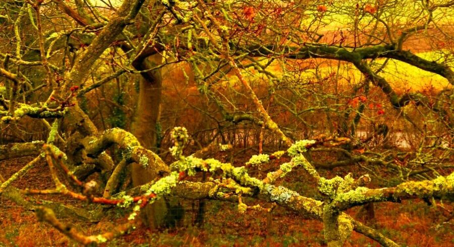 Growth Beauty In Nature Outdoors Branch Tree Autumn English Countryside Autumn Colors Lychen Perspectives On Nature EyeEm Ready