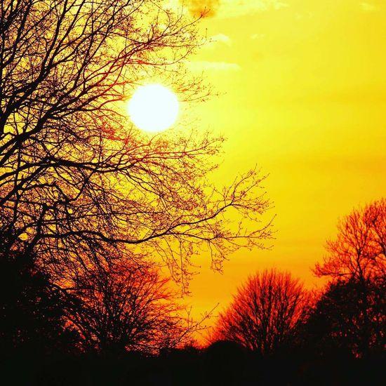 Tree Sunset Branch Silhouette Sky