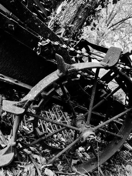 Monochrome suburbia 23. ...Abandoned? ...Lost? ...Saved? Wood - Material Wagon Wheel Wheel Abandoned Outdoors No People Monochrome Photography Daylight Growth Shadow Decay Damaged Vintage Tools Tree Solitude Day Close-up