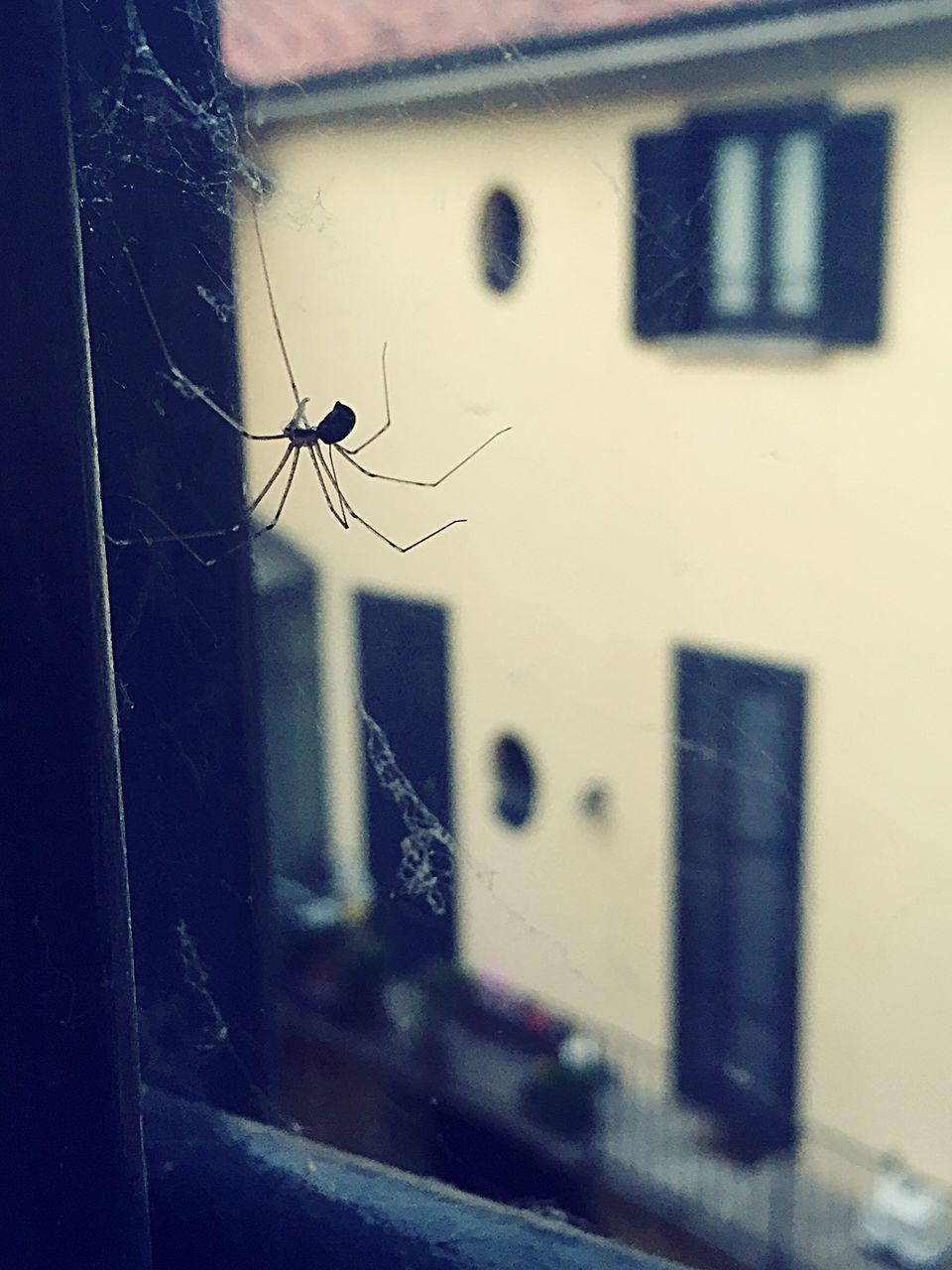 Spider On Glass Window