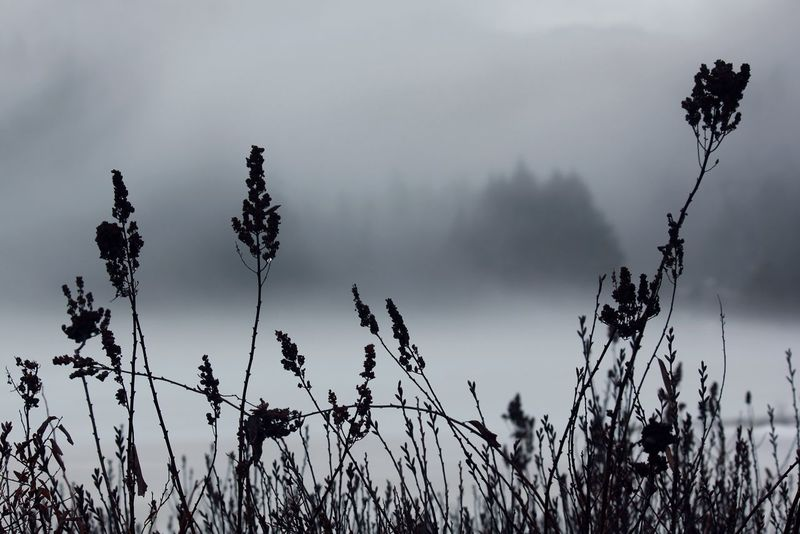 One Mile Lake British Columbia Pemberton Fog Nature Outdoors Silhouette No People Beauty In Nature Landscape Scenics EyeEmNewHere
