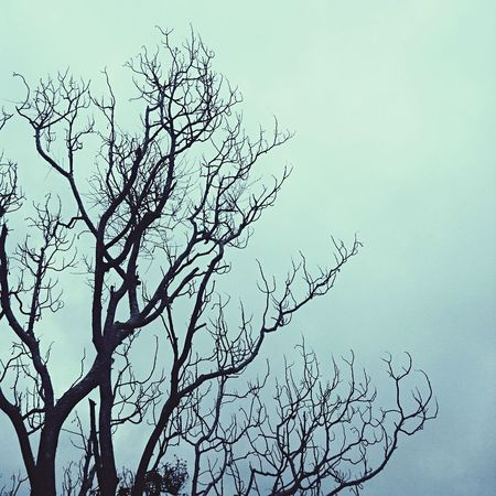 Figtree Nerves Branches And Sky