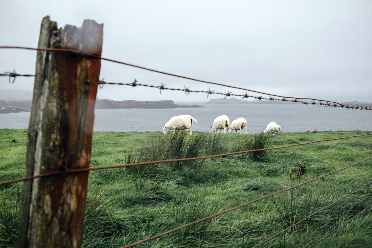 Sheep grazing at lakeshore against sky