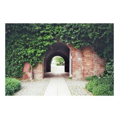 A secret garden...:-) Filmphoto 36mm Photography Garden natur nonedited rollfilm