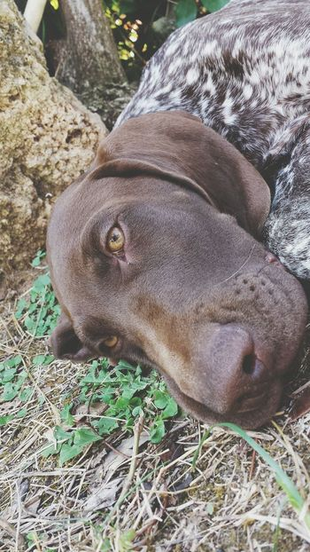Relaxing Taking Photos Enjoying Life Like Followme Hello World Faces Of EyeEm Lastsummer Dog DogLove