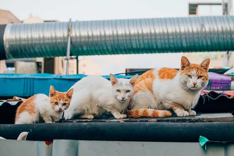 Portrait of cats relaxing outdoors