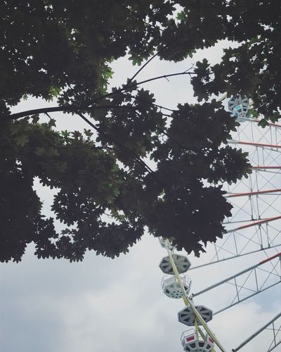 Low Angle View Tree Branch Sky Wheel Big Wheel Funfair Hidden Gems  Paris Wandering Go Higher