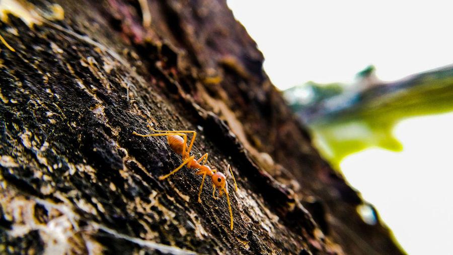 ant on tree Ant