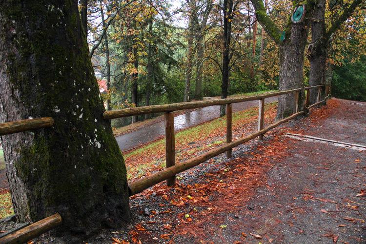 All Paints Of Autumn Autumn Paints Of Autumn Brown Paints Season  Rain Raining Day Trees Park Wet Wet Day Wet Wet Wet Leaves Wet Track