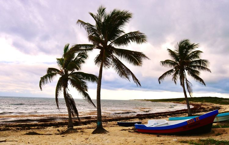 Land Water Sea Sky Tree Palm Tree Tropical Climate
