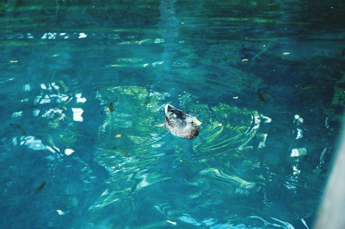 Plitvice National Park Croatia🇵🇾 Lake Bluewater Lake Duck Myfriend And Fish Whatdoyousee