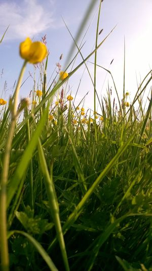 Close-up of flower growing in field against sky