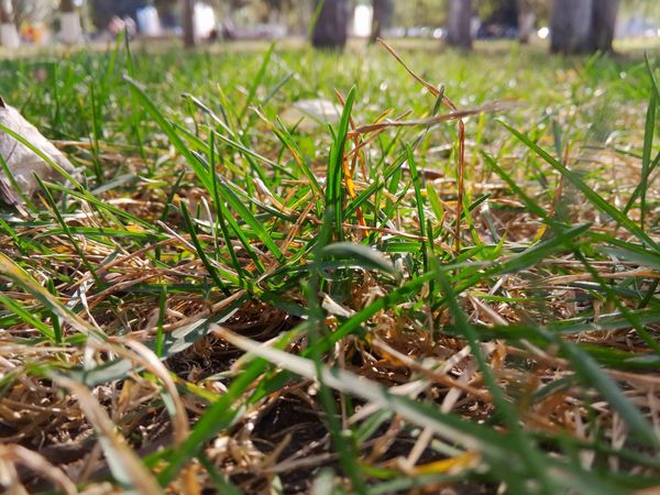 Очень пришла/Autumn came. Grass No People Nature Close-up Beauty In Nature Helloworld Samara EyeEmBestPics Eye4photography  Самара EyeEm Best Edits Russia EyeEm Gallery Nature Eye4photography  Hello World Beach Photography EyeEm Best Shots