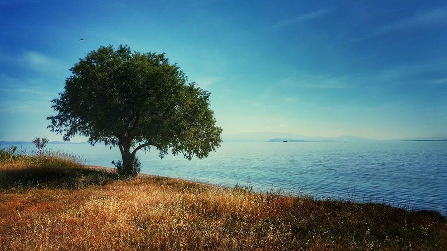Tree Growing By Lake Against Sky