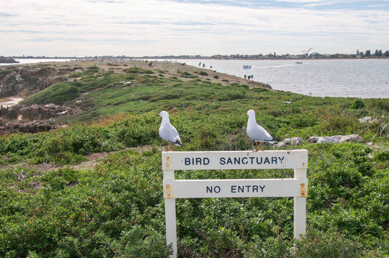 Seagulls perching on sign by sea against sky