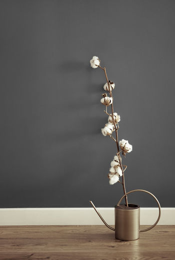 Close-up of cotton plant on table against wall