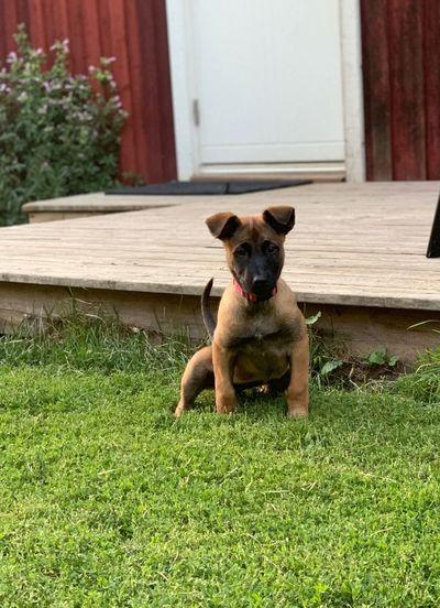 Portrait of dog sitting in grass
