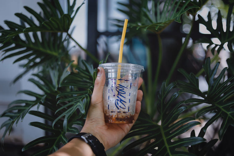 Green Color Green Nature_collection Nature Photography Nature Coffee Coffee Time Coffee Shop Coffee Coffee ☕ Human Hand Tree Drink Holding Close-up Plant Palm Tree Palm Frond Palm Leaf Date Palm Tree Leaves Leaf Vein Fern