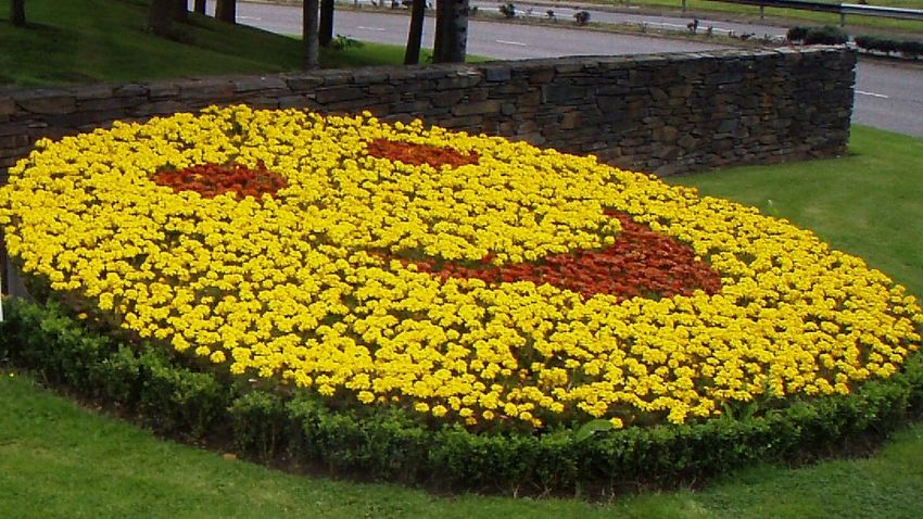 Derry Londonderry Flowers EyeEm Gallery Cgk Photography