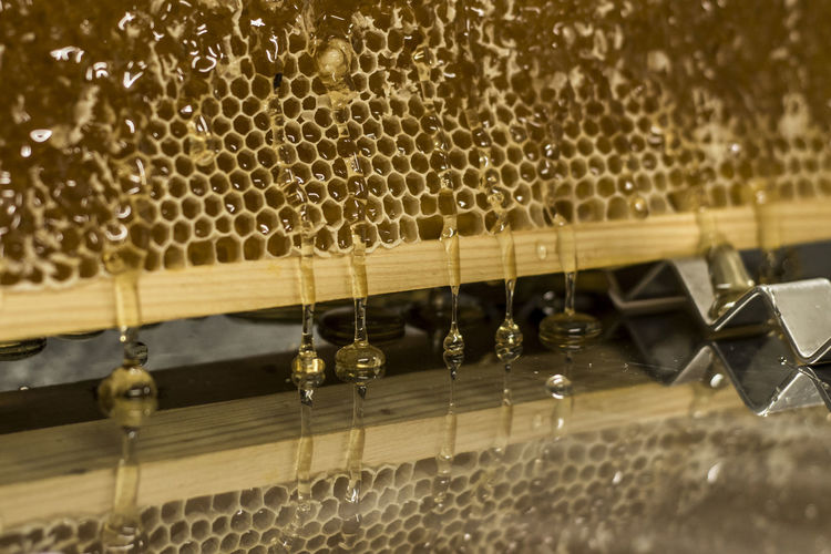 Honey Honeycomb Harvest Liquid Sweet No People Selective Focus Close-up Hanging Indoors  Arts Culture And Entertainment Music Focus On Foreground Musical Instrument In A Row Wood - Material String Instrument Water Musical Equipment Nature Motion Food And Drink Wet Pattern