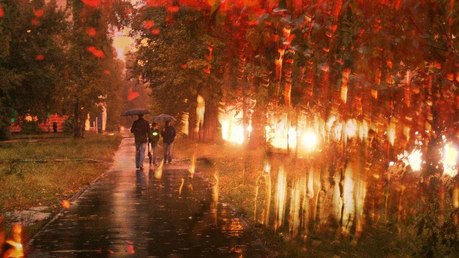 Небрежное ощущение дождя. Autumn осень Street Road Light And Shadow Novosibirsk Sunset Night Lights ArtWork
