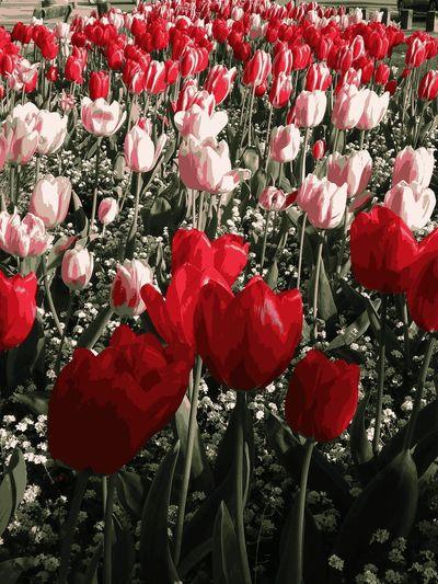 FLOWERS Red Flowers In Park Belgium. Belgique. Belgie. Belgien. Etc. With Filter Avec Filtré с фильтром