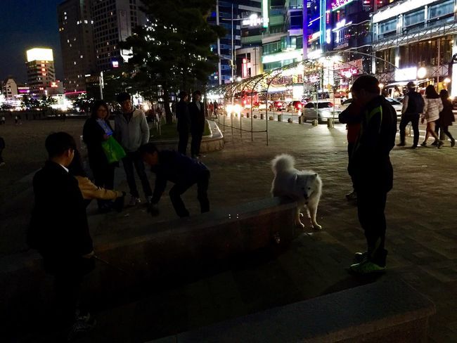 Samoyed Pet Puppy❤ Iphone6plus Night Photography IPhoneography Beach Photography In Busan Traveling Enjoying Life
